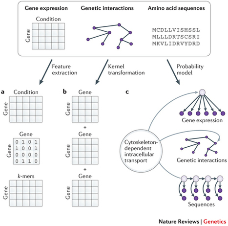 Machine learning applications in genetics and genomics : Nature Reviews Genetics : Nature Publishing Group | Bioinformatics | Scoop.it