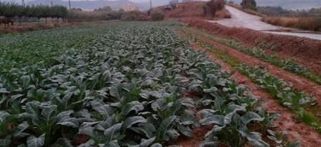 Agricultura destina més de 20.000 euros al Baix Llobregat per al foment de l'Agricultura Ecològica i la Producció Integrada | #territori | Scoop.it
