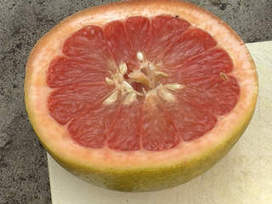 Researchers prepare to release UF914, a new grapefruit that may not cause ... - ABC Action News | Citrus Science | Scoop.it