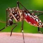 Warnings of 'catastrophic' Chikungunya epidemic; fears it could spread during the World Cup | Virology and Bioinformatics from Virology.ca | Scoop.it
