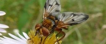 Devenir un paparazzi des insectes pollinisateurs avec le SPIPOLL | Ecology view | Scoop.it