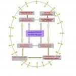 management systémique | ITConsulting-fr | Scoop.it