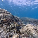 Google Maps Takes Street View Under The Sea | Payday UK Loan- Payday Loans | Scoop.it