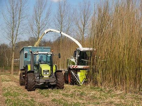Energy crops in Germany: more perennials needed (new study, 2014) - Bioenergy Crops   Bioenergy Crops   Scoop.it