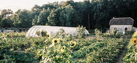 La permaculture peut-elle nourrir les Français? | Un potager dans la ville | Scoop.it