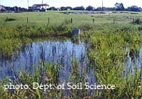 Don't Waste the Drought | Research from the NC Agricultural Research Service | Scoop.it