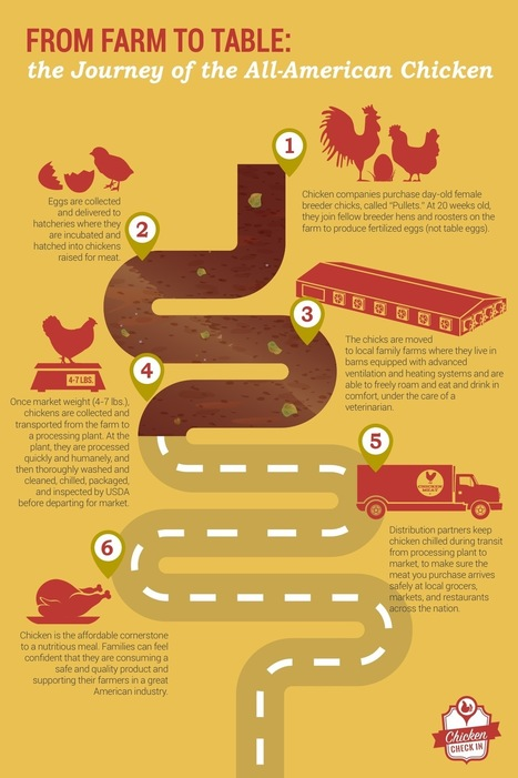 Farm to Table   Chicken Check In   Livestock Equipment News and Trends   Scoop.it