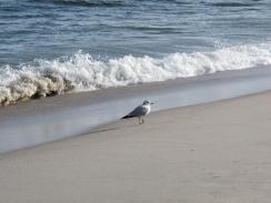 Odd changes in ocean salt spur NASA expedition   Climate change challenges   Scoop.it