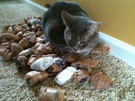 Cat Man Do | Dr. Arnold Plotnick: Reader Question: Can Cats be Hoarders? | Feline Health and News - manhattancats.com | Scoop.it
