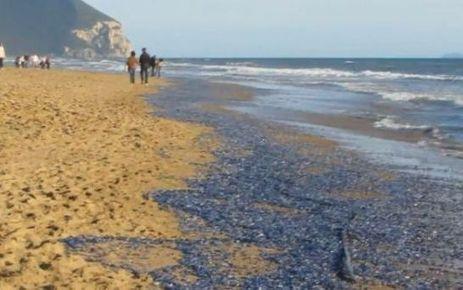 Les plages corses et italiennes recouvertes d'une étrange nappe bleue (+vidéo)   Toxique, soyons vigilant !   Scoop.it