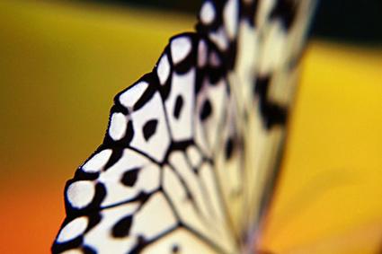 Miriam Pye: Biomimicry as a Brainstorming Technique | Transition Culture | Scoop.it