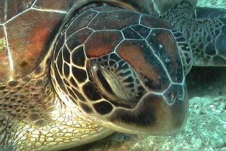 See the Beauty Underneath with Scuba Diving in Thailand - A Beach Blog   Luxury Travel   Scoop.it