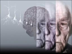 Cervello: la memoria degli anziani è rallentata dalle troppe informazioni - Meteo Web   PsicoNews   Scoop.it