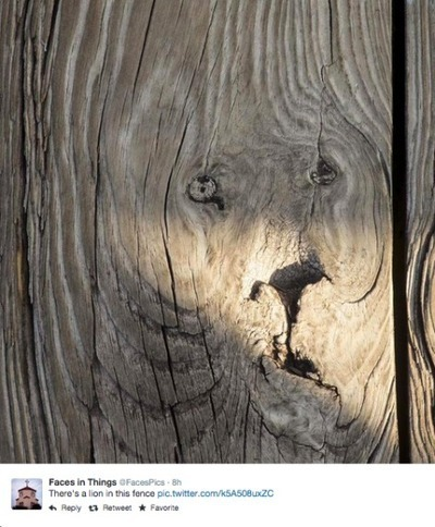 Lion fence | The brain and illusions | Scoop.it