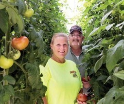 They're turning tomato season upside down | HamptonRoads.com | PilotOnline.com | Vertical Farm - Food Factory | Scoop.it