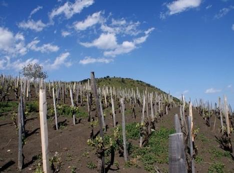 Singing the charms of Sicilian wine | Vitabella Wine Daily Gossip | Scoop.it