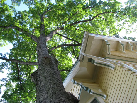 Protecting Trees During Storms   diyhomeimprovement   Scoop.it