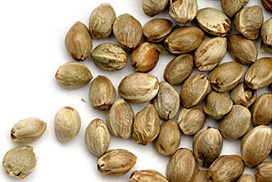 Hemp seeds: should this superfood be illegal? | Healthy Eating | Scoop.it