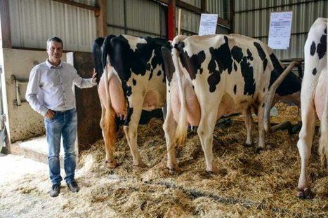 La Pologne développe l'export de son lait vers la Chine | Questions de développement ... | Scoop.it