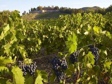 Tuscany: If it's Wednesday, then it must be Montepulciano ... | Vitabella Wine Daily Gossip | Scoop.it