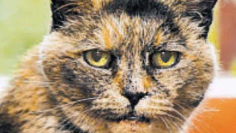 Le plus vieux chat du monde est mort | Les chats c'est pas que des connards | Scoop.it