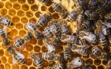 Honeybees in Massachusetts Are Riddled With Pesticides | Sustainable Futures | Scoop.it