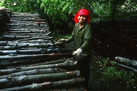 La gestion durable des forêts est cruciale pour éradiquer la pauvreté, selon l'ONU | Biodiversité | Scoop.it