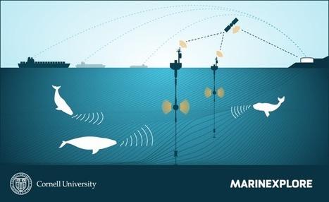 'Description - The Marinexplore and Cornell University Whale Detection Challenge - Kaggle | e-Xploration | Scoop.it