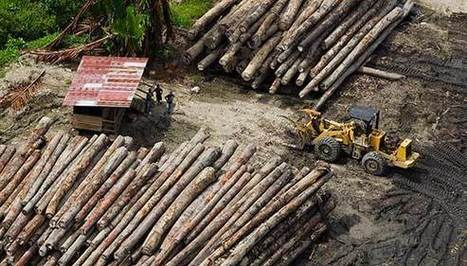 Landmark Court Decisions Return Land to Papua New Guineans   Alter Tierra: Agroécologie & Agriculture   Scoop.it