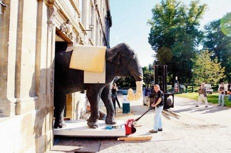 Bordeaux : Miss Fanny, l'éléphante mascotte du Muséum d'histoire naturelle déménage | Bordeaux : tourisme et art de vivre | Scoop.it