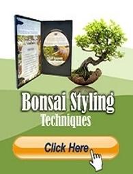 Indoor Bonsai Tree Care Tips | Japanese Maple Tree | Scoop.it