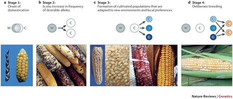 Evolution of crop species: genetics of domestication and diversification : Nature Reviews Genetics : Nature Publishing Group | biotechnology | Scoop.it