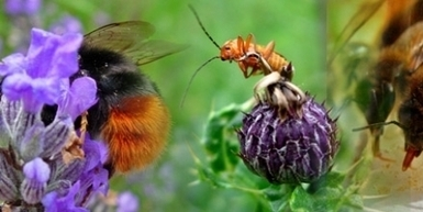 Are Neonicotinoids Too Big To Ban? | Neonicotinoids | Scoop.it