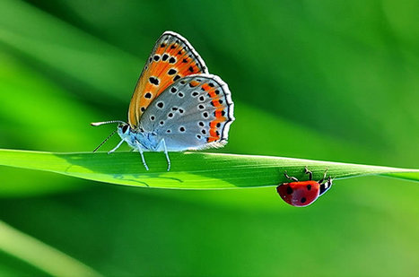 60 Fascinating Butterfly Pictures | Web Design Inspiration | Everything Photographic | Scoop.it
