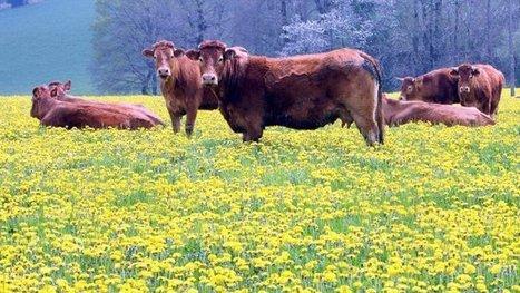 Aquitaine Limousin Poitou-Charentes : le visage de la plus grande région agricole d'Europe – Réforme territoriale - France 3 Poitou-Charentes | Monde Agricole | Scoop.it