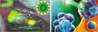 Emergence of Nanobiotechnology | Social Foraging | Scoop.it