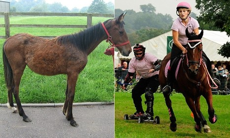 Candy the wonder horse: This pitiful abandoned foal grew into champion | Animals and Other Stories | Scoop.it