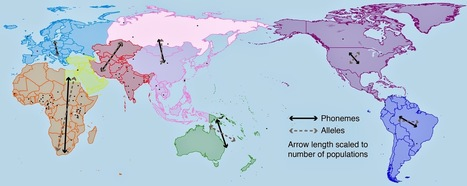 The Archaeology News Network: Human dispersal and the evolution of languages show strong link | Litteris | Scoop.it
