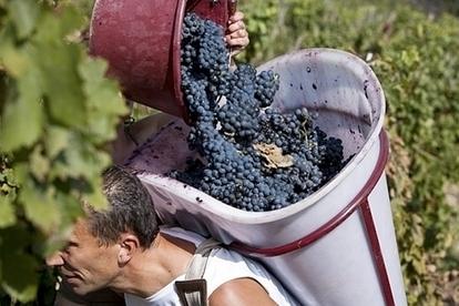 Du Rhône au Beaujolais, les vendanges se préparent - Terre de Vins | oenologie en pays viennois | Scoop.it