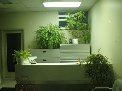 Management With Bad Credit: Can Plants Help your Business Grow? | Business Management | Scoop.it