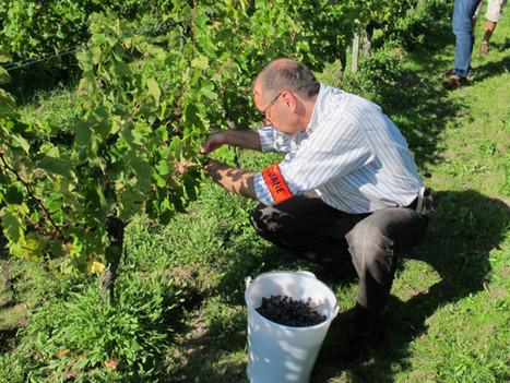 Langon : La douane passe le vignoble au crible | Le Vin et + encore | Scoop.it