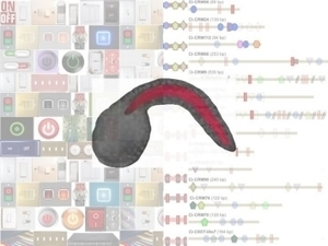 Shedding Light on Genetic Switches During Spine Development | Amazing Science | Scoop.it