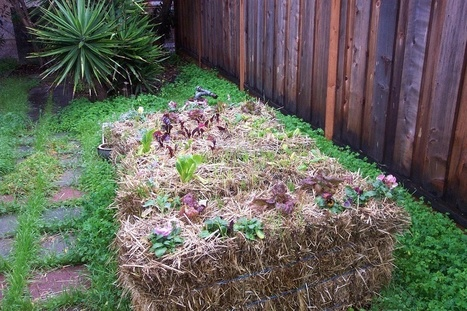 10 Reasons To Try Straw Bale Gardening + How To Get Started   Home and Garden Ideas   Scoop.it