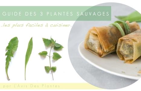 Mon Guide gratuit des 3 plantes sauvages les plus faciles à cuisiner ! | pour mon jardin | Scoop.it