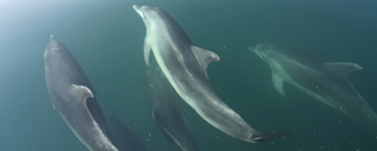Special opportunity to get to know bottlenose dolphins in Greece | Zoology | Scoop.it