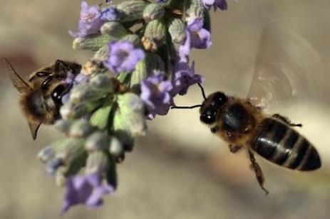 Mortalité des abeilles : l'Assemblée interdit les insecticides néonicotinoïdes | Chronique d'un pays où il ne se passe rien... ou presque ! | Scoop.it