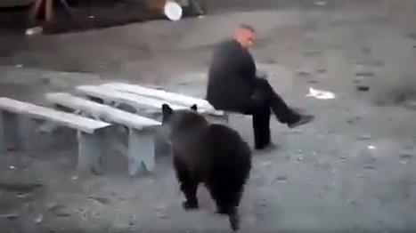 Russian Man Doesn't Give a Damn About Bear Roaming Nearby #VIDEO  | Limitless learning Universe | Scoop.it