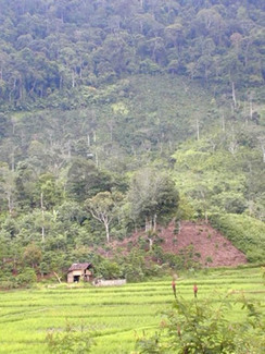 Does erosion represent landscape-level loss or gain of carbon stocks? | Agroforestry World Blog | Climate Smart Agriculture | Scoop.it