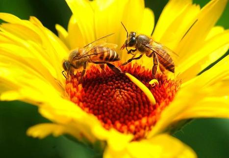 The Hindu : Sci-Tech : Climate change leads to concern about honey bees | Climate change challenges | Scoop.it