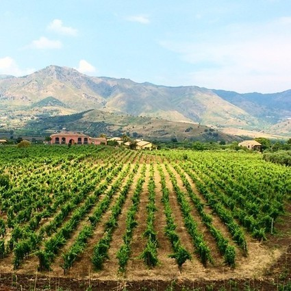 Mount Etna: Wine from Sicily's ancient mountain of fire | Going Places 2nd semester | Scoop.it